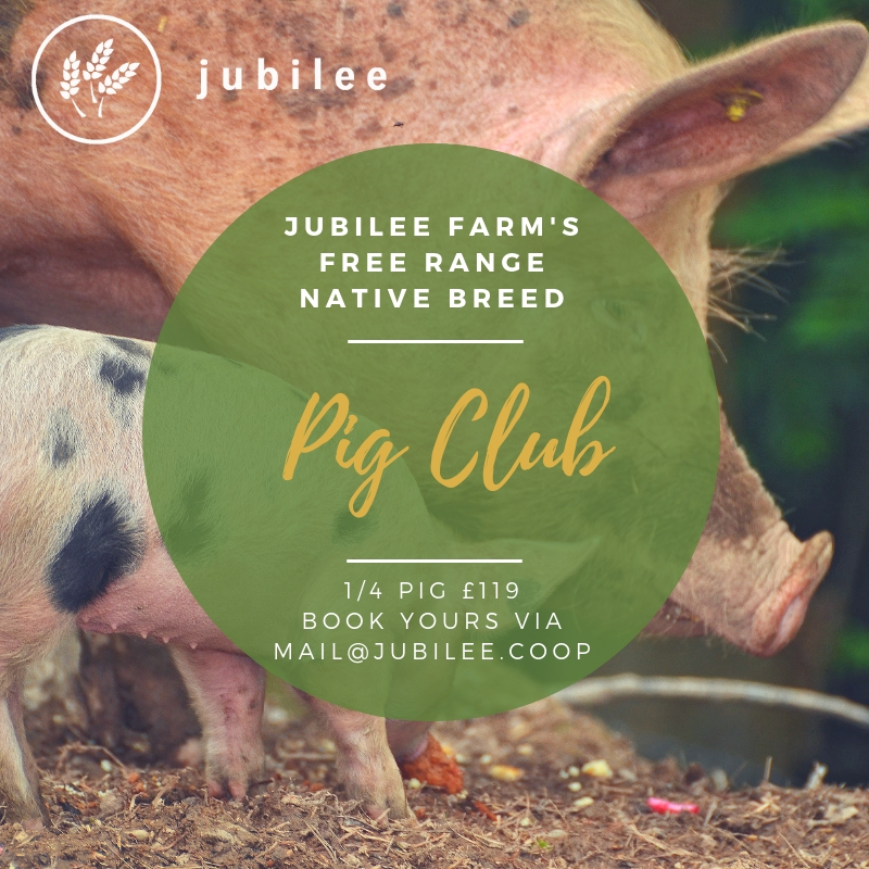 Jubilee Farm's Pig Club part of community supported agriculture. Look for more information on our Pig Club page.