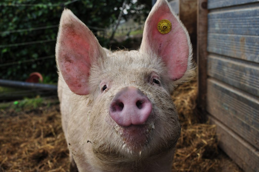 Care, community, conservation, and, of coarse, our pig club pigs, are only some of what makes up Jubilee Farm.