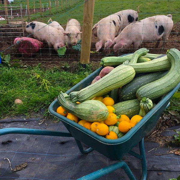Jubilee Farm grows pigs, veggies, goats, turkeys, and geese.